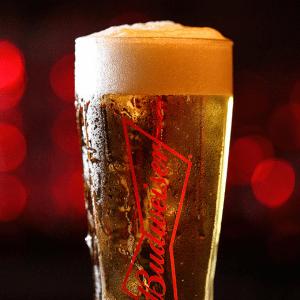 bia budweiser nhập khẩu